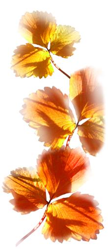 Farbe Orange Geschichte Assoziationen Einsatz Orange Sinne